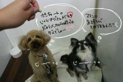 100円shop♪_b0130018_18522859.jpg