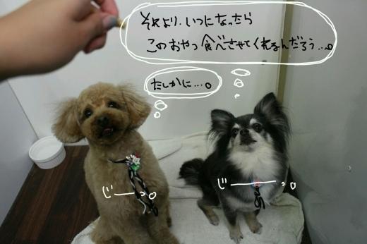 100円shop♪_b0130018_18523168.jpg