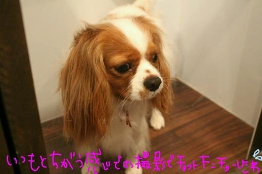 100円shop♪_b0130018_18554049.jpg