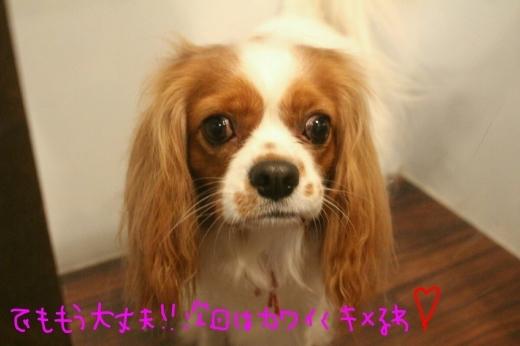 100円shop♪_b0130018_18554596.jpg