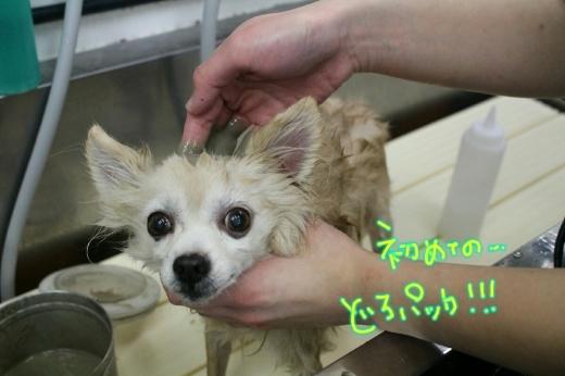 100円shop♪_b0130018_18593413.jpg