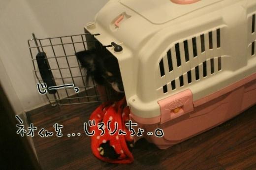 100円shop♪_b0130018_18595153.jpg