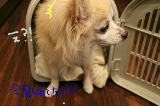 100円shop♪_b0130018_18595473.jpg