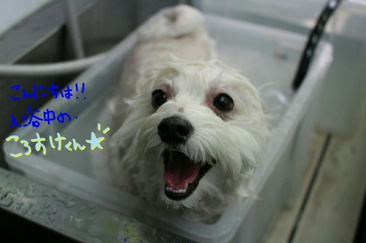 100円shop♪_b0130018_19083050.jpg