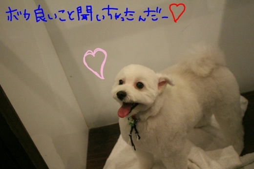 100円shop♪_b0130018_19084568.jpg