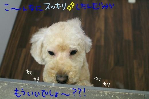 100円shop♪_b0130018_19150380.jpg