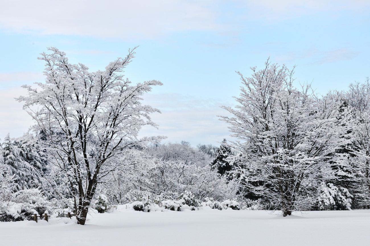 久々の雪景色_c0220824_19263052.jpg