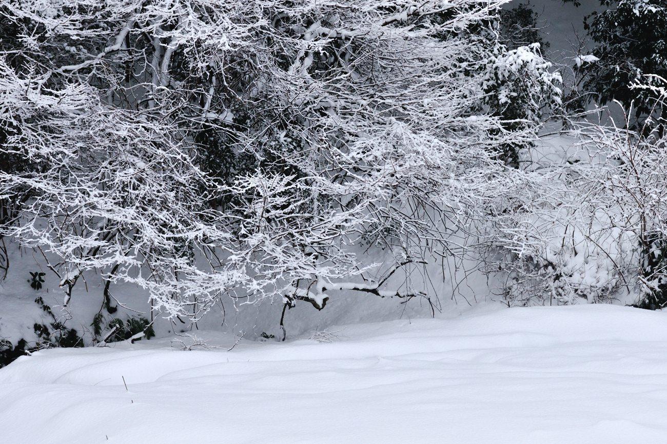久々の雪景色_c0220824_19264180.jpg