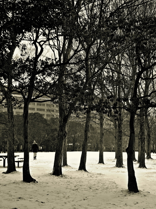 Snapshot of the snow day_f0315034_12061171.jpg