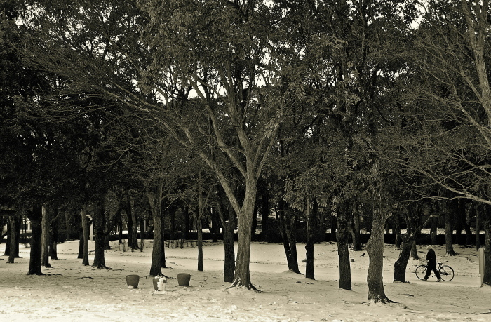 Snapshot of the snow day_f0315034_12064017.jpg