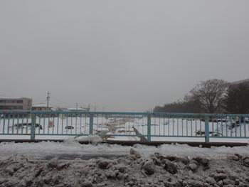 雪は雨に変わって_a0014840_20263073.jpg