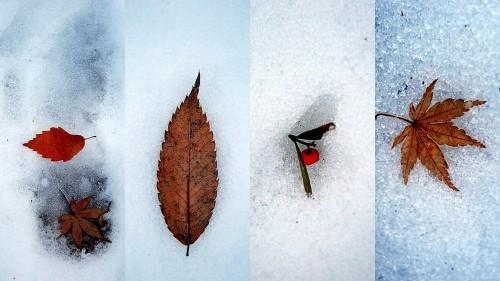 雪の落とし物_b0314043_08105719.jpg