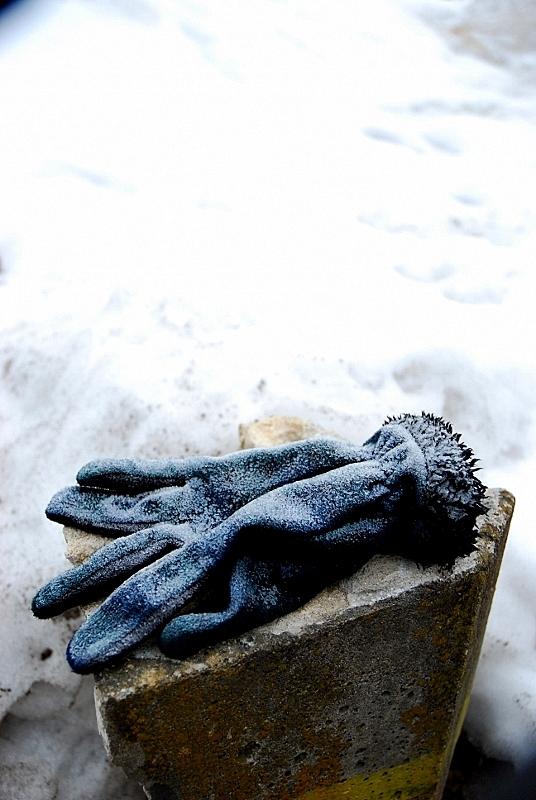 雪の落とし物_b0314043_08111668.jpg