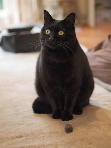 黒猫の…_a0335560_15460315.jpg