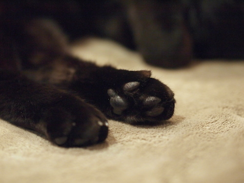 黒猫の…_a0335560_15460386.jpg