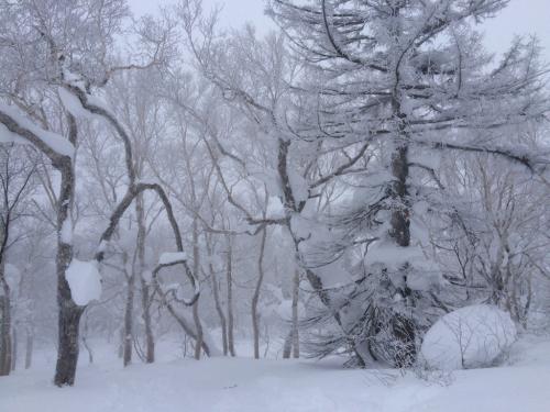 北海道2日目⭐️札幌国際スキー場_c0151965_11312081.jpg