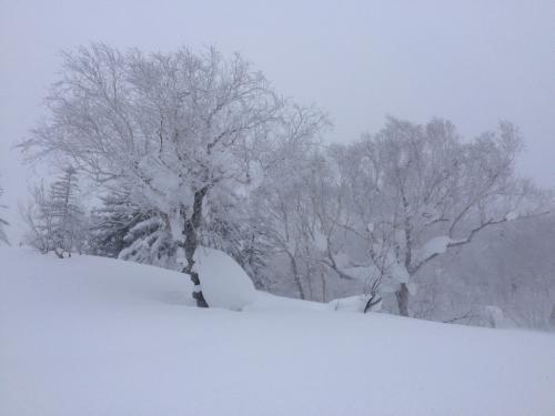 北海道2日目⭐️札幌国際スキー場_c0151965_11312130.jpg