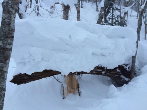 北海道2日目⭐️札幌国際スキー場_c0151965_11312228.jpg