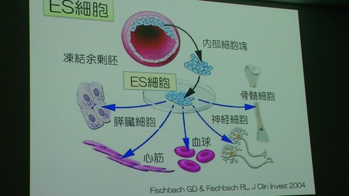 iPS細胞研究講演会_a0221584_1547433.jpg