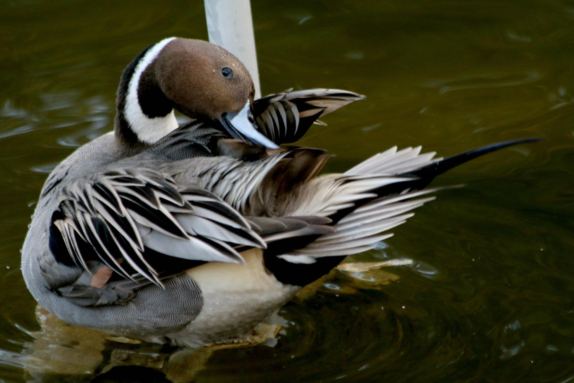 上野動物園で見かけた野鳥_a0127090_2327256.jpg