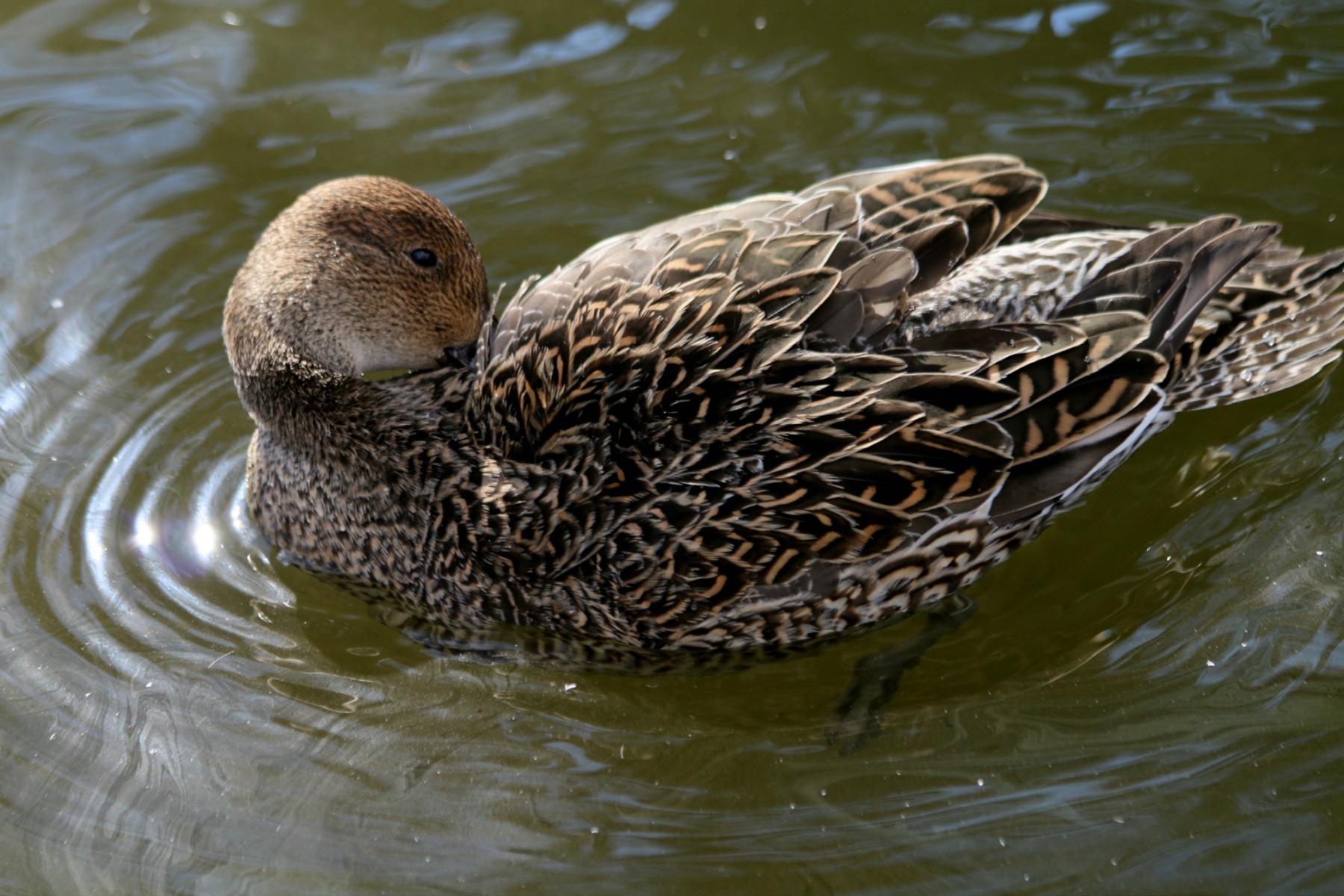 上野動物園で見かけた野鳥_a0127090_23273878.jpg