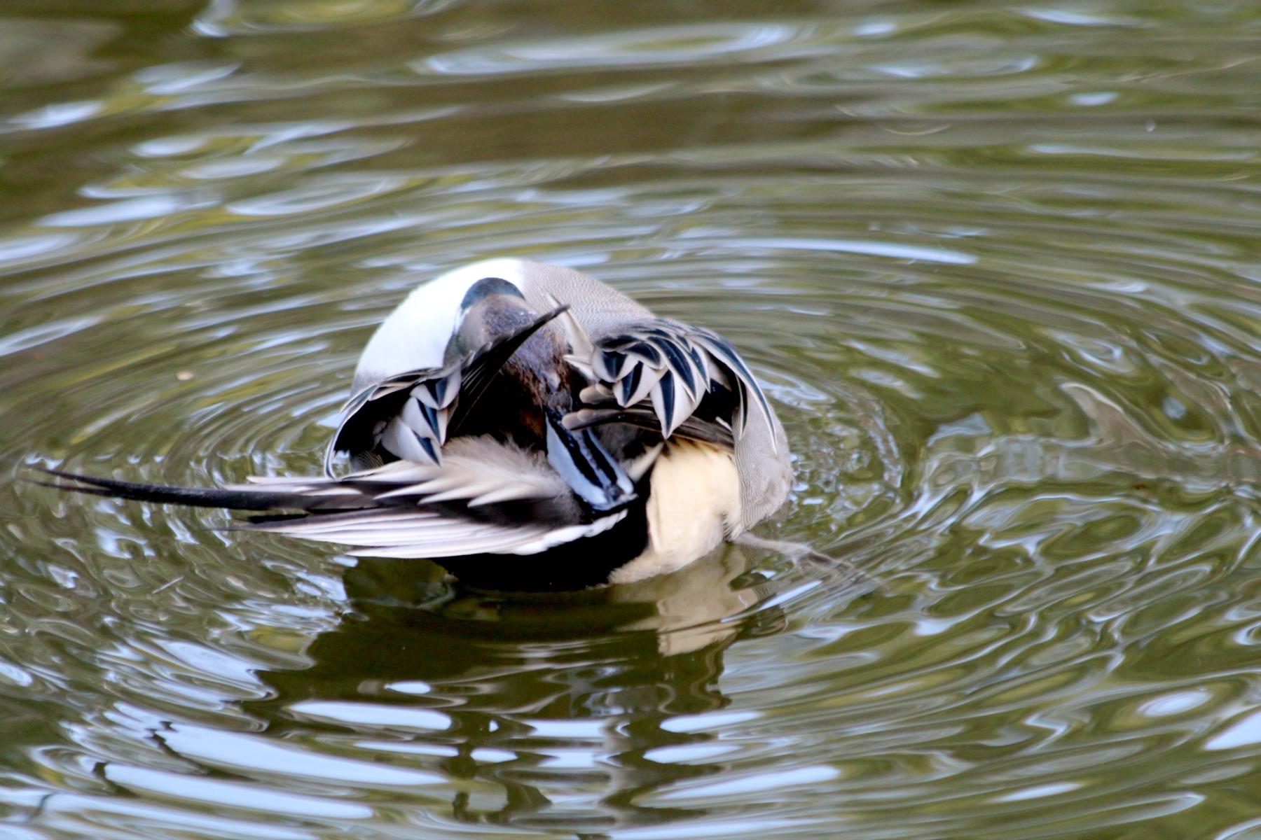 上野動物園で見かけた野鳥_a0127090_232786.jpg