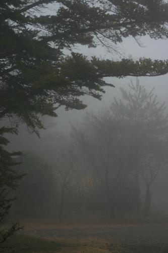 今日は霧_e0179508_14021749.jpg
