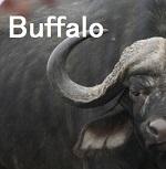 両側気胸の原因:バッファローチェスト(Buffalo chest)_e0156318_839409.jpg