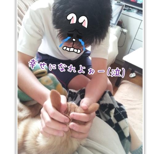 立春☆ゴボちゃん幸せ報告_b0207320_23565151.jpg