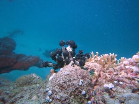 バリ島ツアー報告3日目_c0070933_23410475.jpg