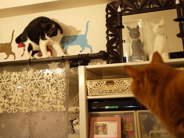 やばい猫 しぇるみるきぃ編。_a0143140_21455498.jpg