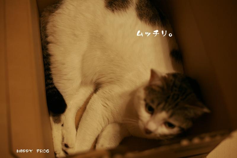 f0032042_1911225.jpg