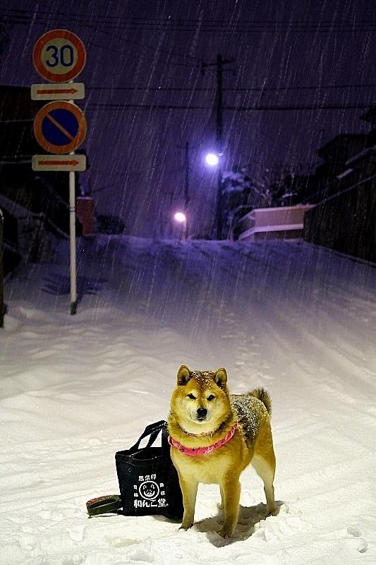 週末の朝はいつも雪かき_b0314043_21434647.jpg