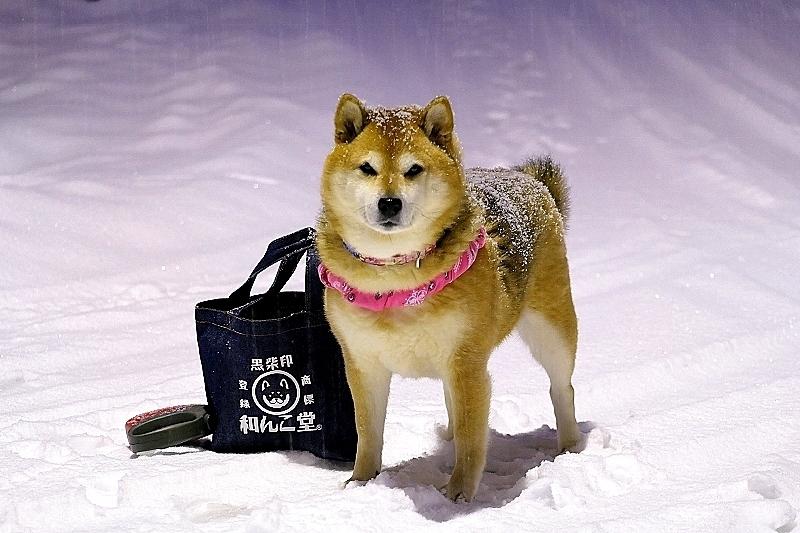 週末の朝はいつも雪かき_b0314043_21435583.jpg