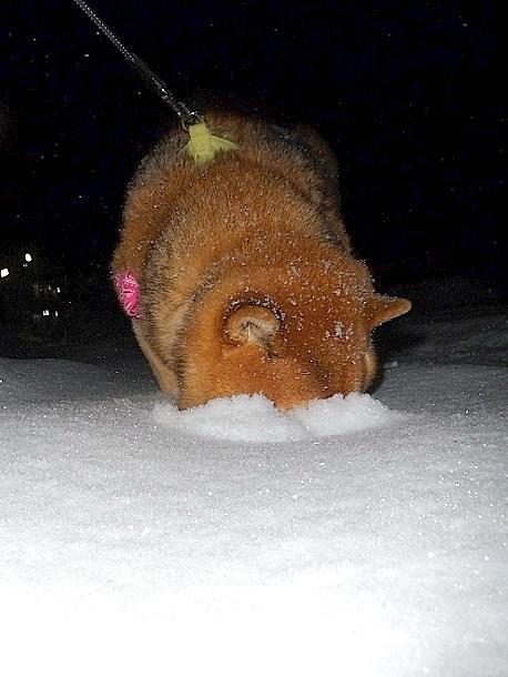 週末の朝はいつも雪かき_b0314043_21441609.jpg