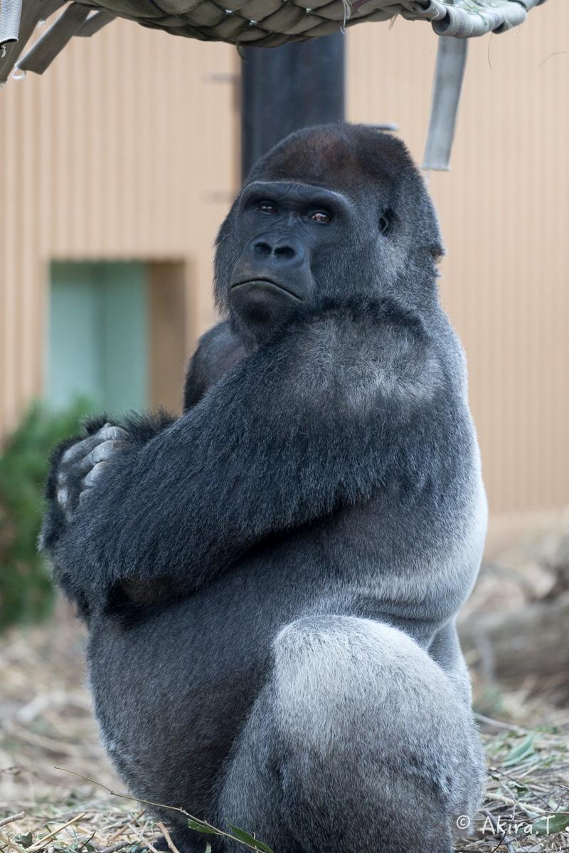 京都市動物園 -2-_f0152550_23364911.jpg