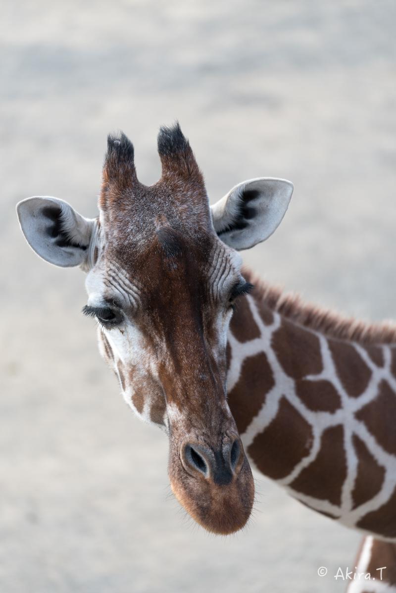 京都市動物園 -2-_f0152550_23391625.jpg