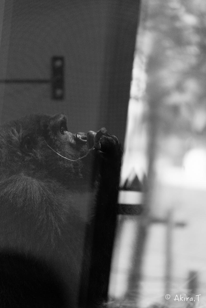 京都市動物園 -2-_f0152550_23421123.jpg
