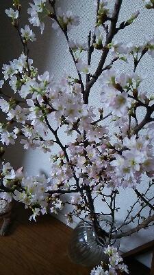 サロンに『桜』を飾りました_f0008555_20101644.jpg