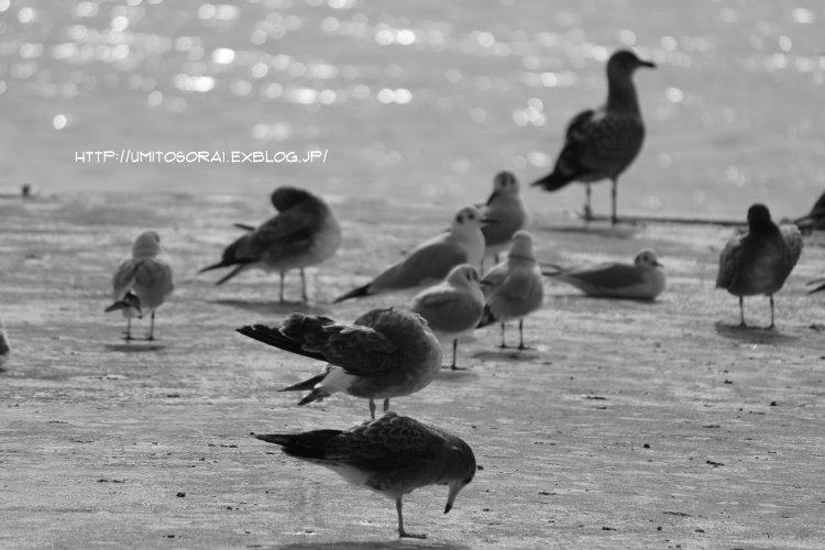 モノクロ漁港_b0324291_18455766.jpg