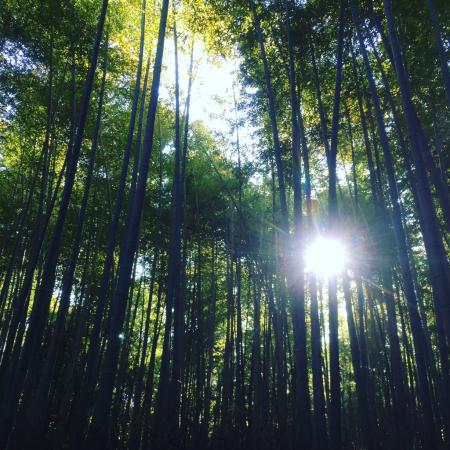 Bamboo _a0167912_20111464.jpg