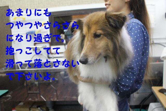 b0130018_7101054.jpg