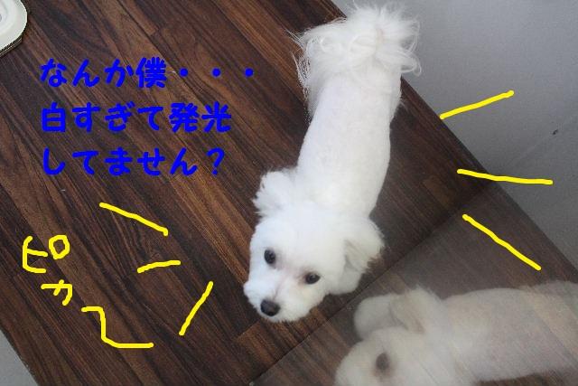 b0130018_712987.jpg