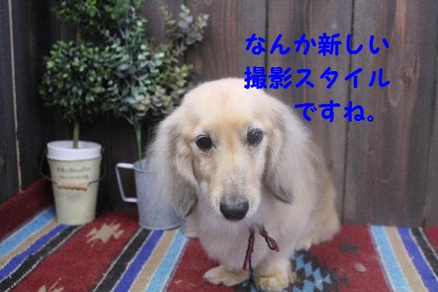 b0130018_7164895.jpg