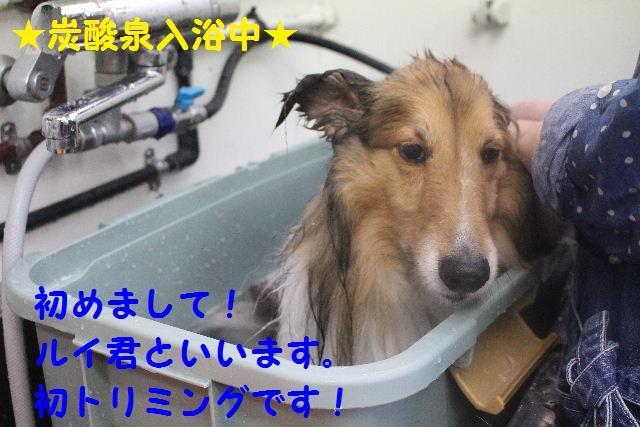 b0130018_79661.jpg