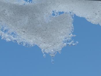 雪の雫_a0014840_19181929.jpg