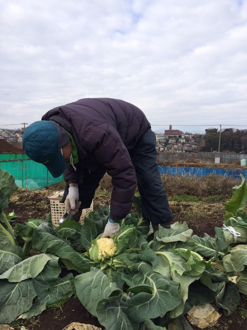 本日は総勢5名 各野菜順調に収穫しました _c0222448_19330030.jpg