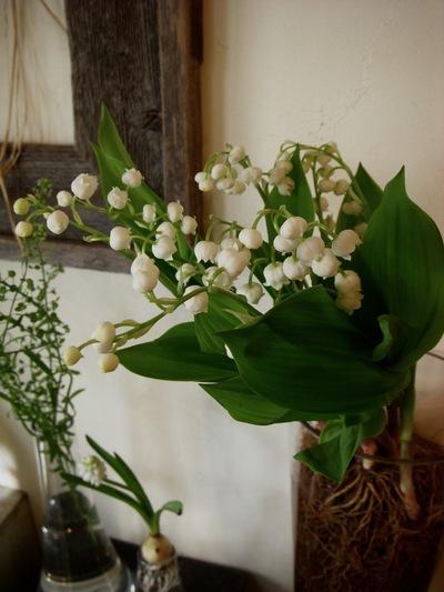 小さい春。。。_a0229658_1130363.jpg