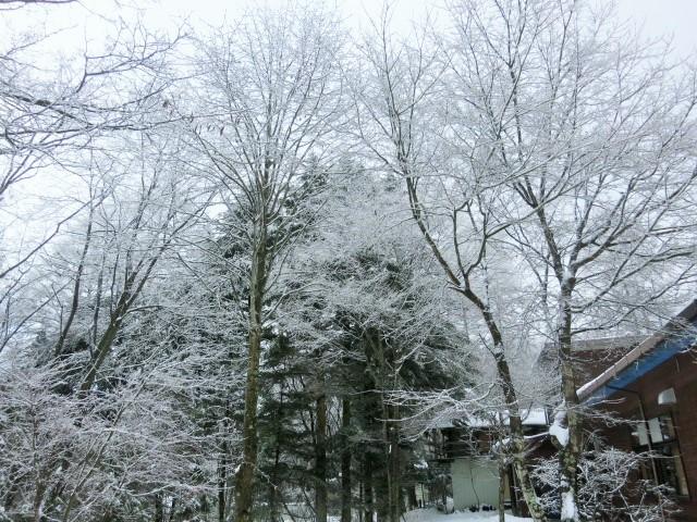 pace aroundで雪のお花見 @御代田_f0236260_22174341.jpg