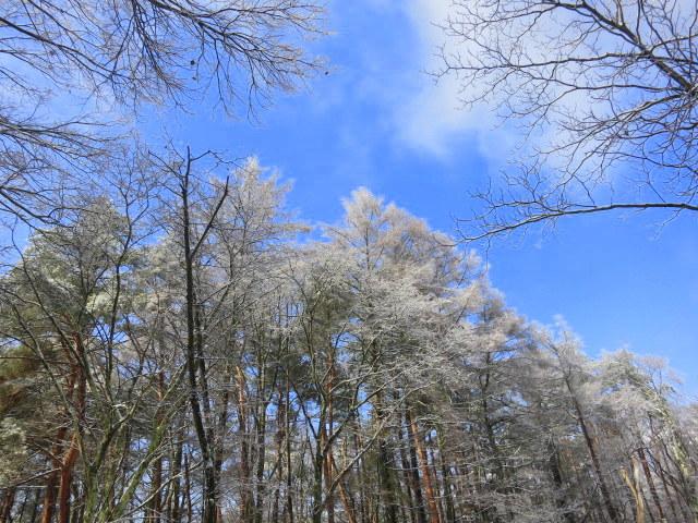 pace aroundで雪のお花見 @御代田_f0236260_233688.jpg